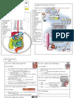 digestive_system_tour_activity_form2.pdf