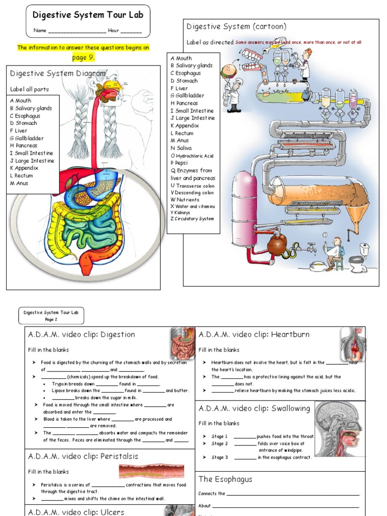 digestive_system_tour_activity_form2.pdf   Human Digestive System    Gastrointestinal Tract