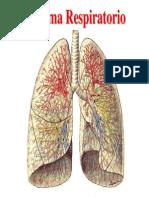 Respiratorio Biologia