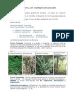 CLASIFICACION DE PLANTAS.doc