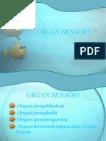 Organ Sensori materi FHA