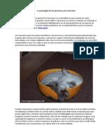 La Psicología de Las Personas y Las Mascotas