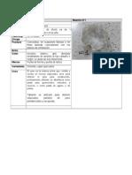 Reconocimiento Macroscopico de Minerales