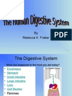 digestive-system.ppt