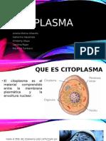 Cito Plasma - biologia