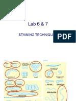 Lab 5 & 6 Staininig Tech & Unknowns Spring 2010-2