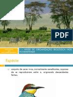 I - NIVEIS DE ORGANIZAÇAO BIOLOGICA DOS ECOSSISTEMAS [Reparado].pdf