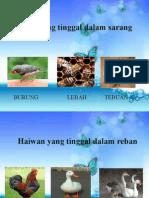 TEMPAT TINGGAL HAIWAN.pptx