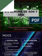 3 1 Genoma Dna Rna (1)