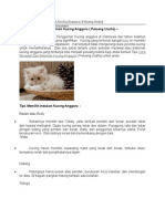 Cara Merawat Dan Beternak Kucing Anggora