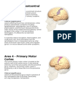 Brodmann Areas and Cortical Functions