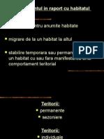 Teritoriu Spatiu Personal