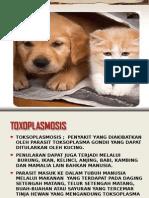 III. Toxoplasmosis