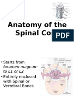Spinal Cord 2011