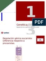 Tema 13 Neoplasias Genetica