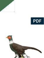 Target 13 - Pheasant Paper Targets (A3)