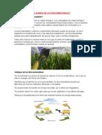 Problemas Generados Por Los Biocombustibles
