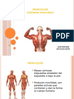 power point musculos