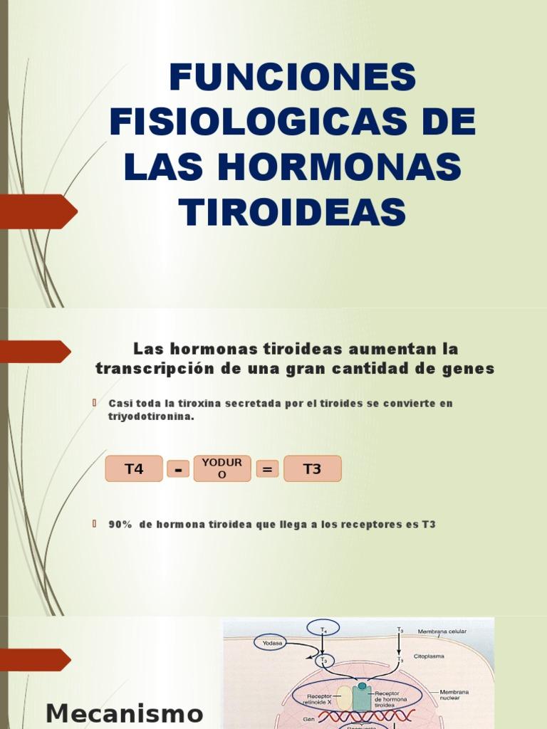 Funciones Fisiologicas de Las Hormonas Tiroideas