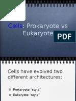 cells_2