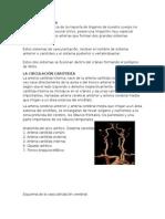 Ictus - Patologia