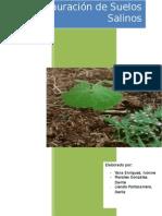Informe restauración de suelos salinos