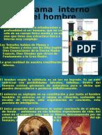 18diagramainternodelhombre-100823153113-phpapp01.pptx