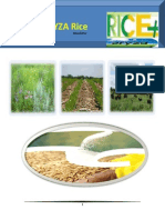 23 February,2015 Daily EXclusive ORYZA Rice E_Newsletter by Riceplus Magazine