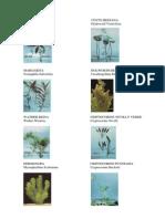 Catalogo de Plantas Nacionales -macrofitas