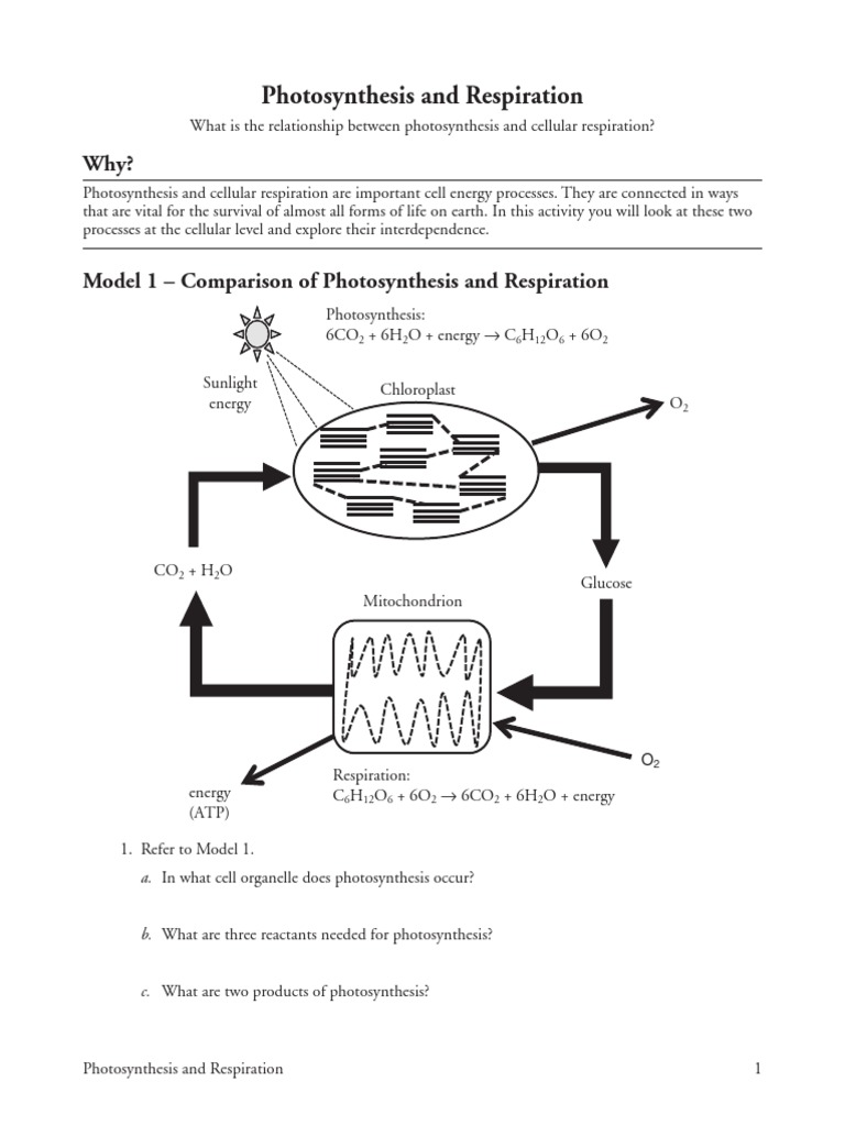 Pogil photosynthesis and respiration s photosynthesis cellular pogil photosynthesis and respiration s photosynthesis cellular respiration ccuart Gallery