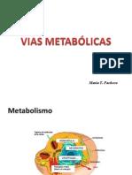 2. Vias Metabólicas Listo
