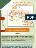 Fosforilacion Oxidativa Gato