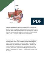 A Importância Do Fígado