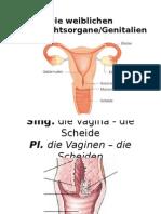 Lecciones de Alemán - Aparato Reproductor Femenino
