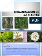 Organización de Las Plantas en Ppt