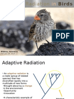 Adaptive Radiation in Birds