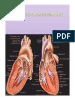 121335403-Farmacologia-cardiovascolare