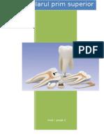 referat morfologie dentara