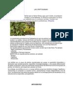 criptogamas.pdf
