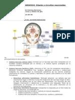 Tema 2.1Sistema Nervioso.diseño y Circuitos Neuronales Básicos.pdf