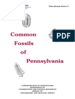 Common Fossils of PA