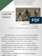 Equus(Evolutia cailor)