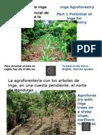 Inga Agroforestry Part 1 Agroforesteria de Inga Parte 1