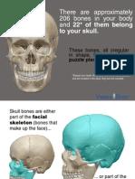 Anatomski Atlas KOSTI GLAVE