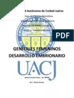 desarrollo embrionario femenino