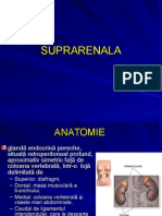 Suprarenal A