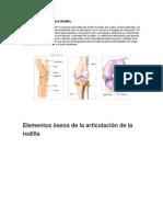 Anatomía y Función de la Rodilla.docx
