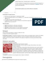 Composição Do Sangue Humano