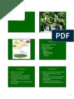 Microsoft PowerPoint - Bryophytes