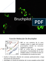 Presentación Bruchpilot
